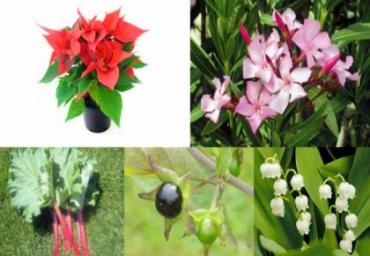 Plante otrăvitoare